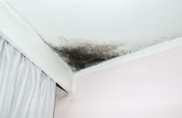 39182210 - mold in the corner of the white ceiling and pink wall, with white curtain on the left side.