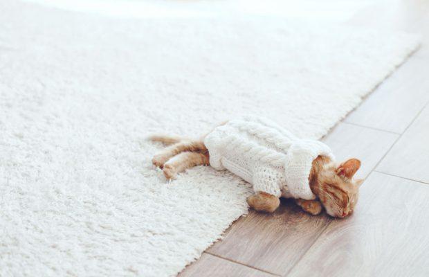 46058514 - cute little ginger kitten wearing warm knitted sweater is sleeping on the floor