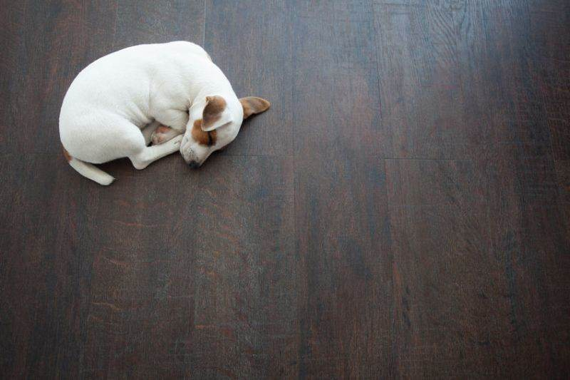 44430192 - puppy sleeping at warm floor. dog